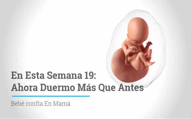 Semana 19 de embarazo