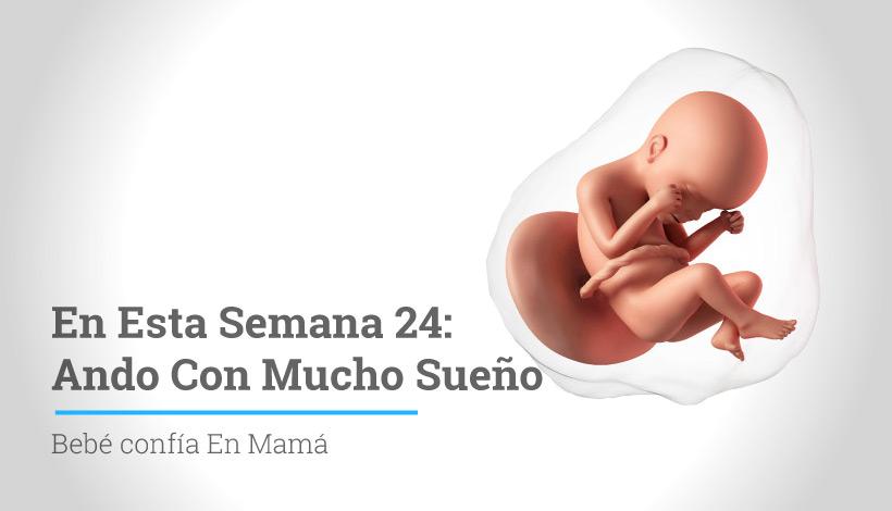 Semana 24 de embarazo