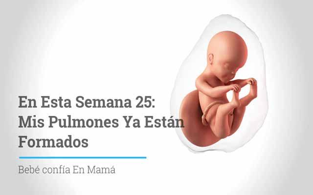 Semana 25 de embarazo