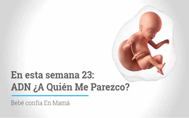 Semana 23 de embarazo