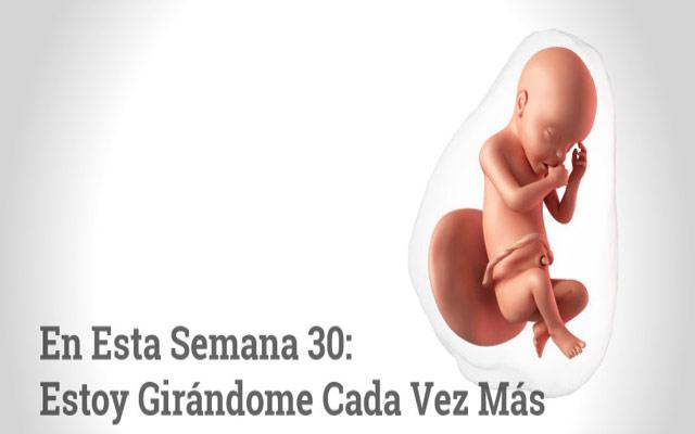 Semana 30 de embarazo