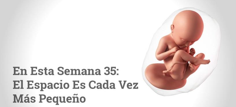 Semana 35 de embarazo