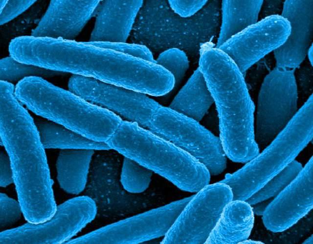 probióticos para bebés