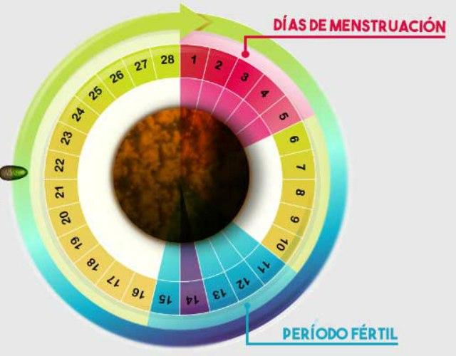 embarazada durante la menstruación