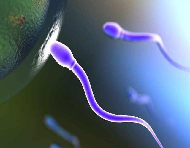 pocos espermatozoides