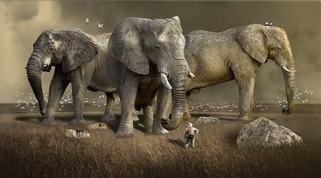 El elefante canción infantil