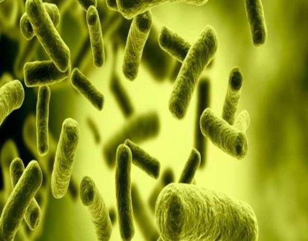 Cómo puede prevenirse la salmonella en niños