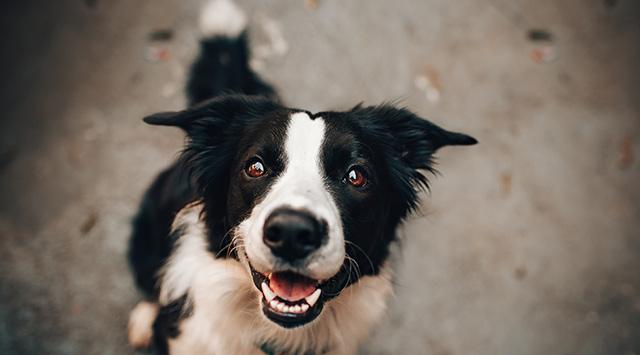 Las 8 mejores razas de perros para niños