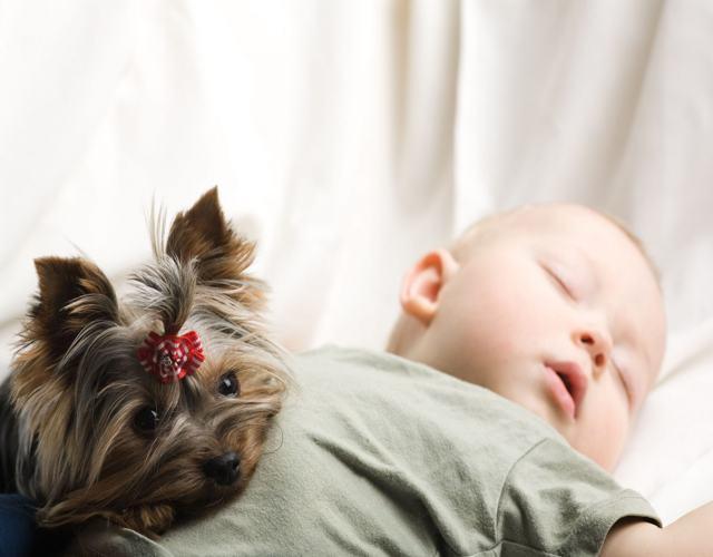 bebés del signo Perro