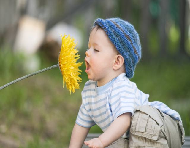 olfato en bebés