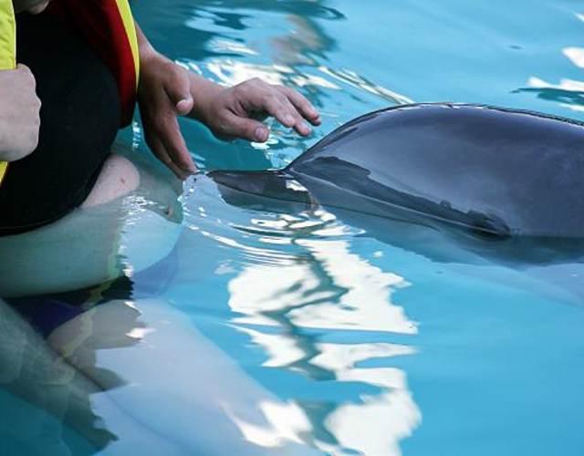terapia con delfines durante el embarazo